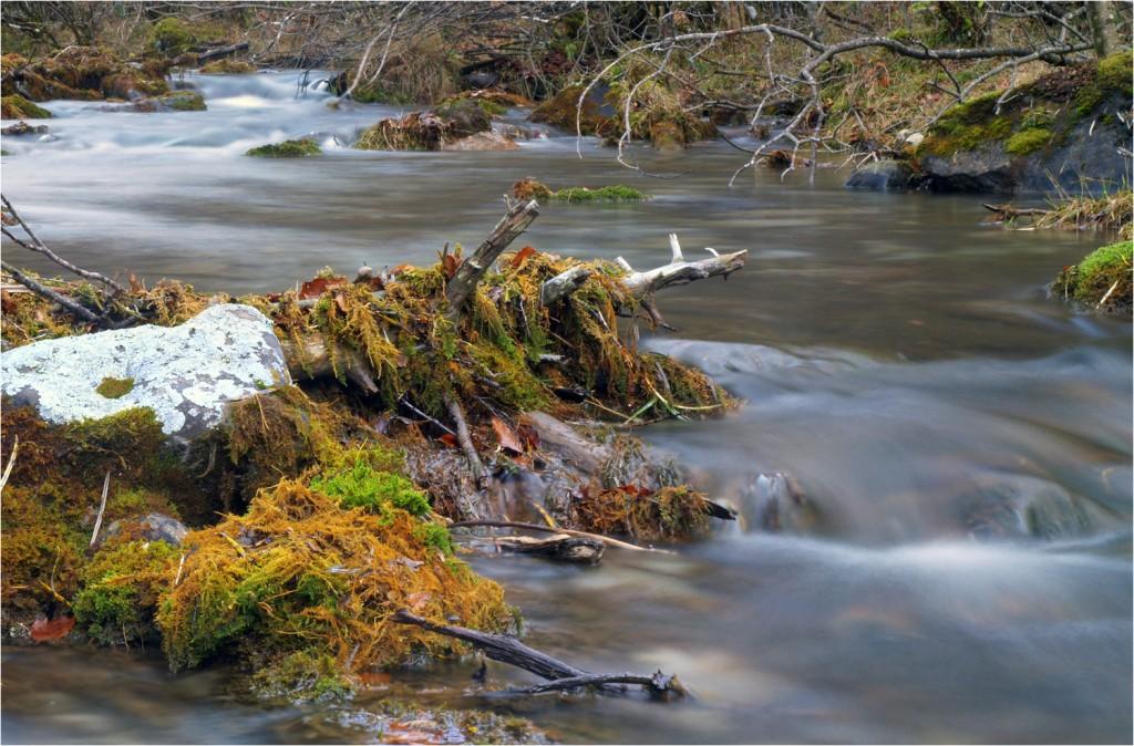 Río Arazas im ruhigen Teil
