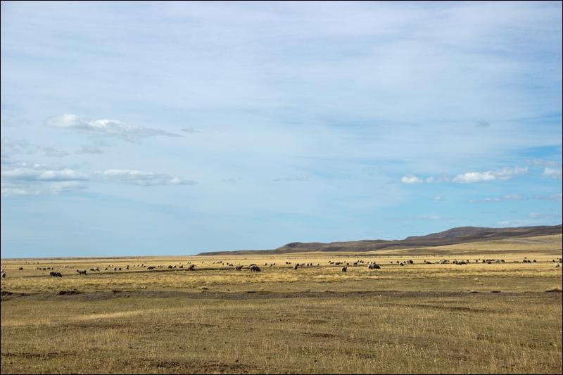 Auf unendlichen Weiten Feuerlands leben laut Internet etwa 10 Millionen Schafe. Menschen gibt es auf Feuerland etwa 135 Tausend.