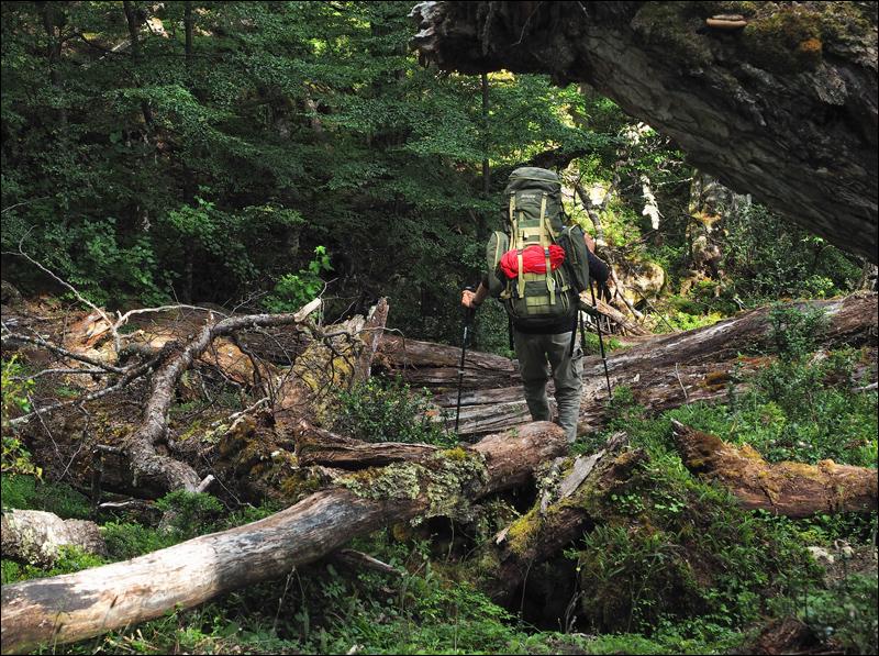 querfeldein durch den Wald